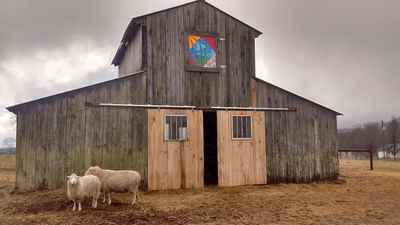 Barn_and_sheep