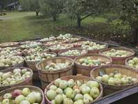 Apples_in_wagon_(2)