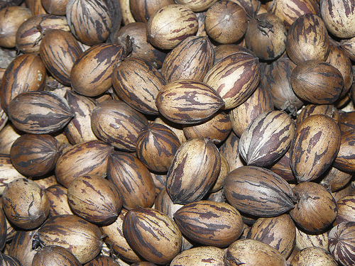 Pecans - In-Shell Grower: Frontier Family Farm Price: $4.00 ( lb )