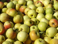 Golden-delicious-apples