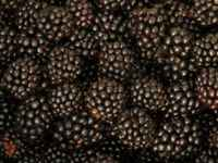 Blackberries_berries_fruits_223611