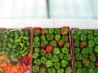 Mixed_colored_peppers_(1)
