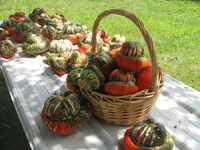Bskets_of_gourds_(2)